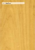 Aspect (texture) bois : bouleau